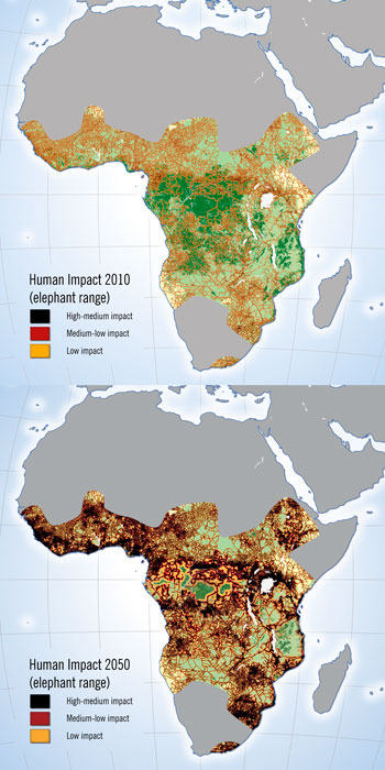 The Future For African Elephants Map And Analysis